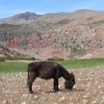 l'âne Martin se restaure avant de partir en escursion