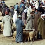 Souk de Guigou: marché aux bestiaux