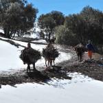 Gîte de la Gorge - randonnée sous la neige