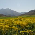 Tichouckt vu de Chaabt - Moyen-Atlas