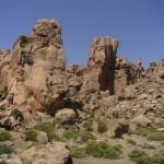 La forêt de pierres