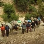 Guides, cuisiniers, mules lors d'une randonnée avec le gîte de la gorge