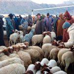 Le souk de Guigou Le marché au bestiaux
